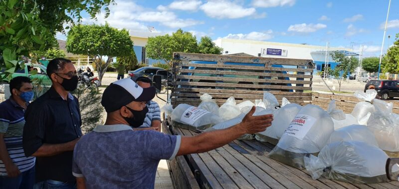 Prefeitura de Igaracy distribui alevinos para agricultores